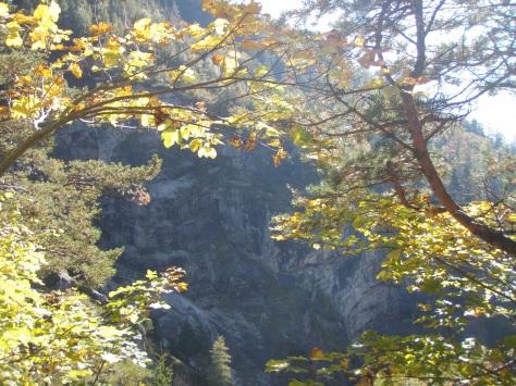 Herbstwald_Ebenau